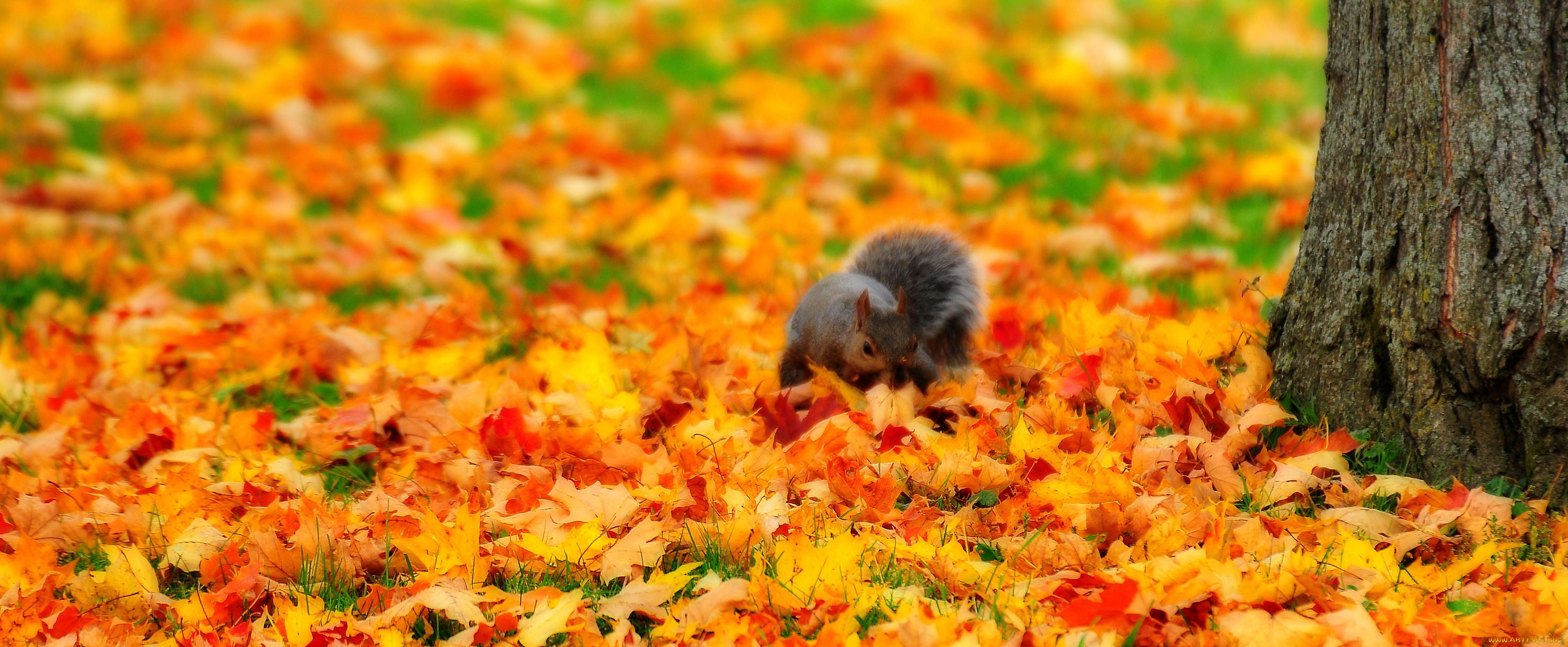 картинки про осень и животных будем